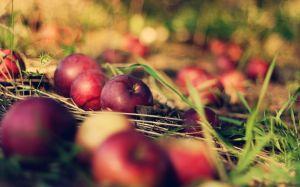 fallen-apples-5886